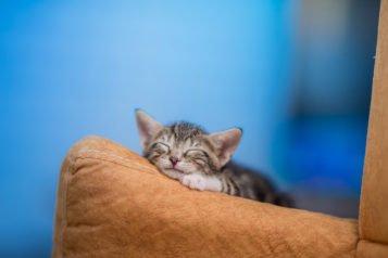 Quel vermifuge pour chaton choisir à votre compagnon ?