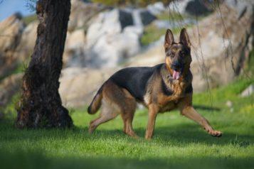 Comment administrer le Canidiarix à votre chien